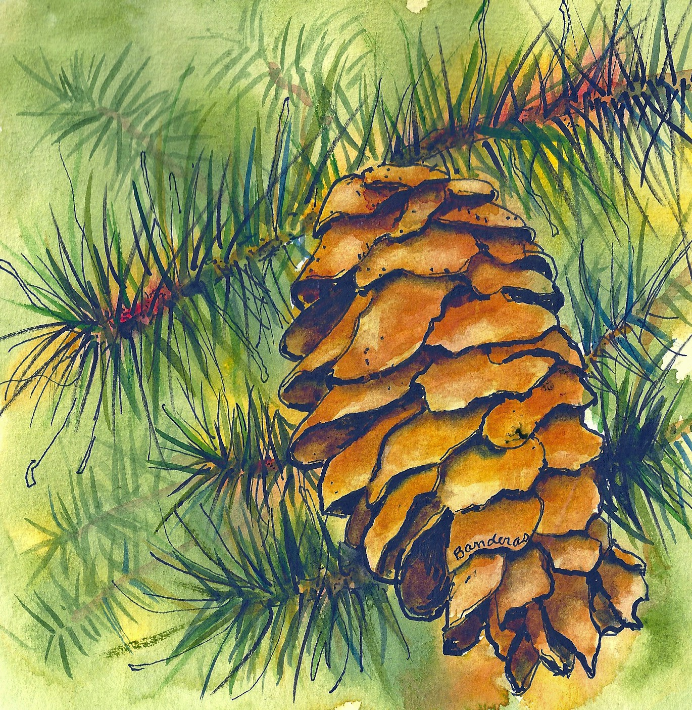 Terry's Ink And Watercolor: Pine Trees