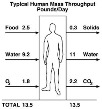 homeostasis cairan dalam tubuh manusia