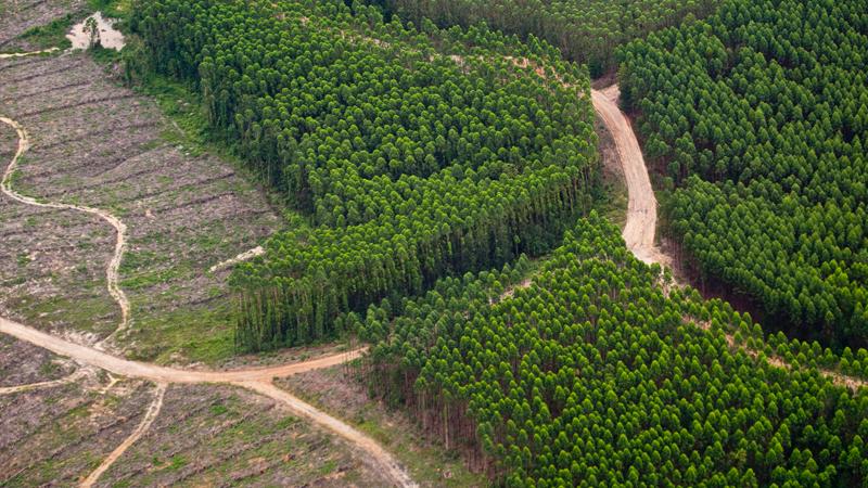 Fungsi Ekosistem Gambu