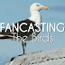 FanCasting: The Birds Remake