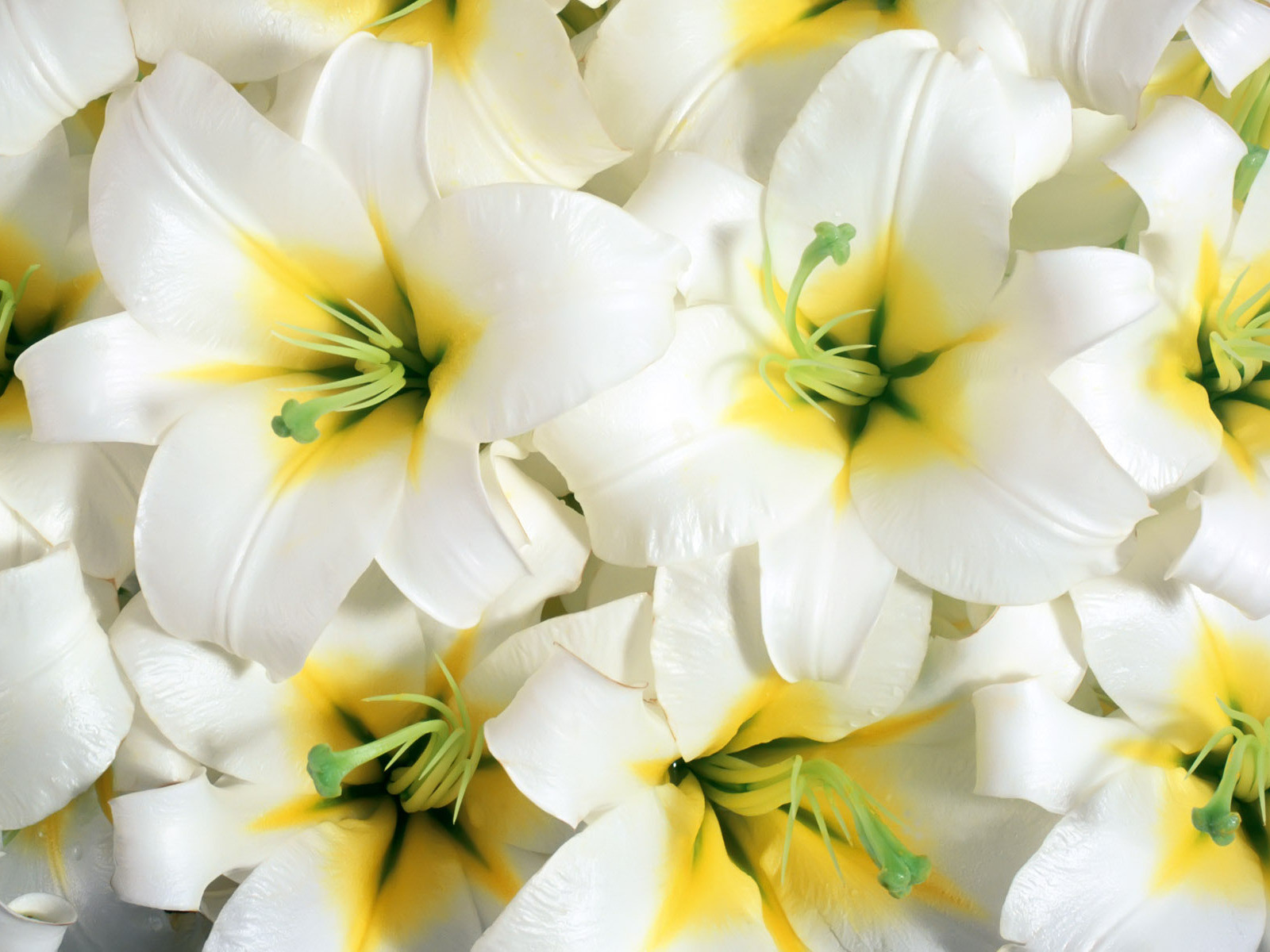 Beautiful flowers wallpapers latest news - Beautiful flower images wallpapers ...
