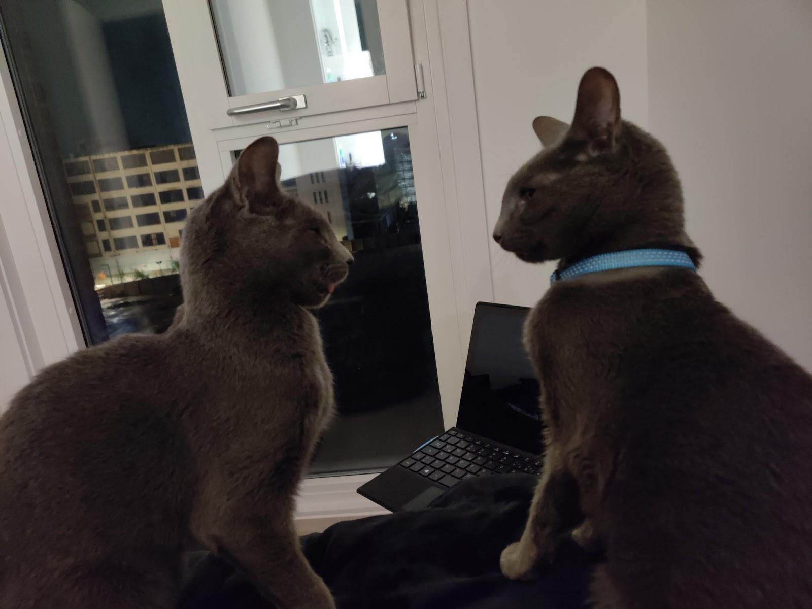 Cats of Fabian Wosar