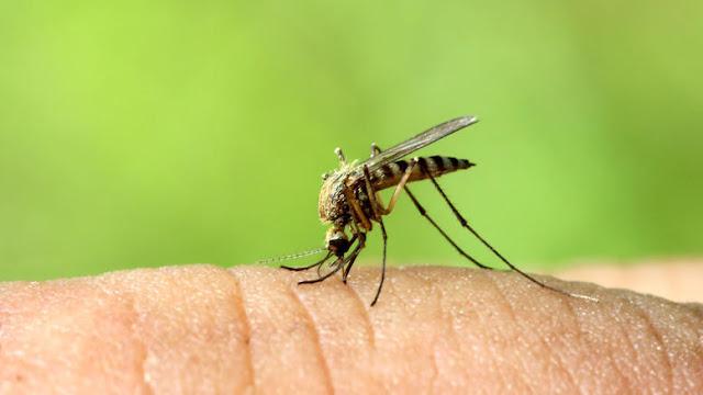 Κρούσμα του ιού του Δυτικού Νείλου στον Δήμο Άργους Μυκηνων