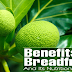 Keep Your Skin And Hair Healthy Without Sacrificing Your Food Intake Using Breadfruit!