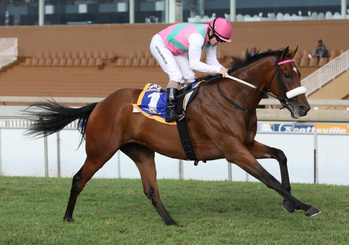 Made To Conquer - Vodacom Durban July 2018 contender