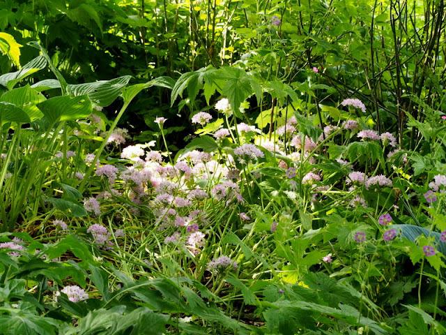 Slaapkamergeluk Plant : Het Bloeiende Buitenleven