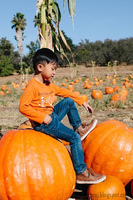 bates nut farm, halloween, pumpkin patch, san diego