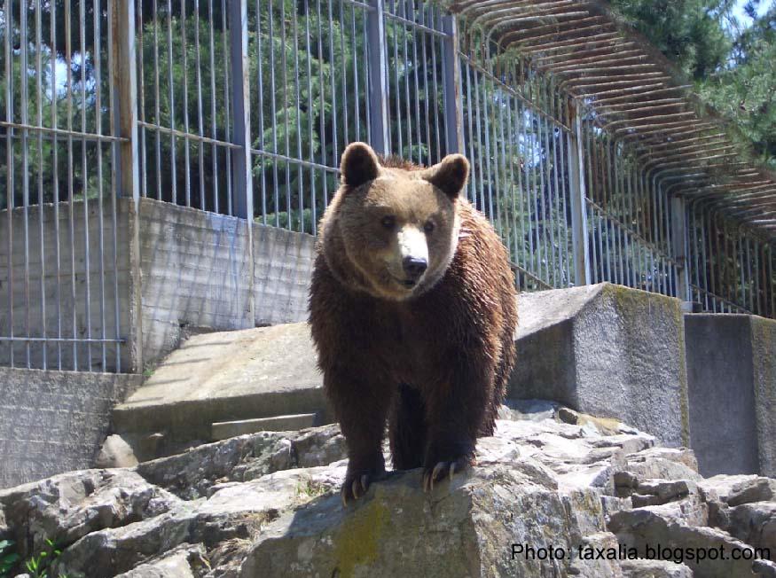 ραντεβού αρκούδα Κόντιακ τόξο dating παιχνίδια 18 δωρεάν online