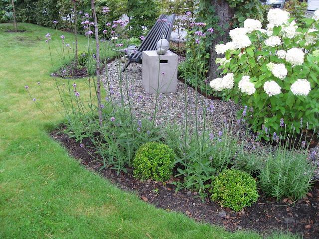 Samplanting av Lavendel og Kjempeverbena rundt furua i Furulunden