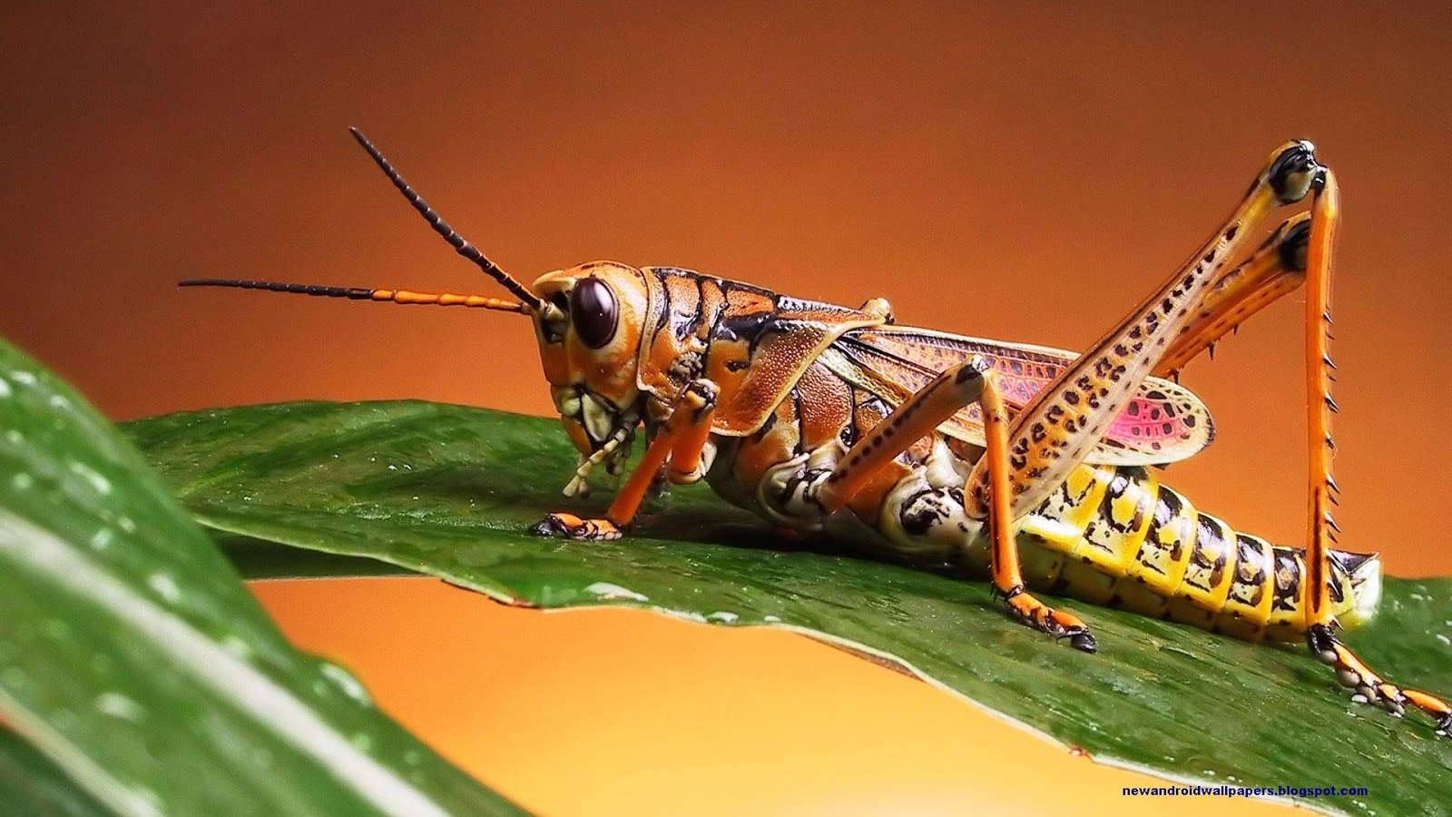 Best Collection Of Insects Wallpapers In Super Hd For