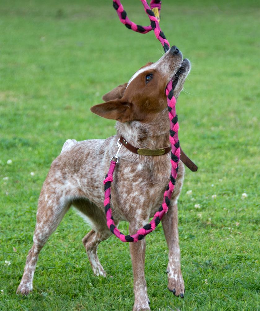 Dog Tug Toy Agility: The Dog Geek: Product Review: Genuine Dog Gear Tug Leash