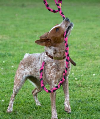 Braided fleece agility tug leash
