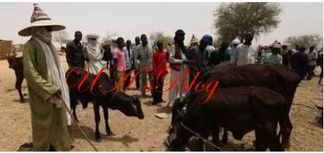 Fulani group gives FG, Governors condition for peace between herdsmen, farmers