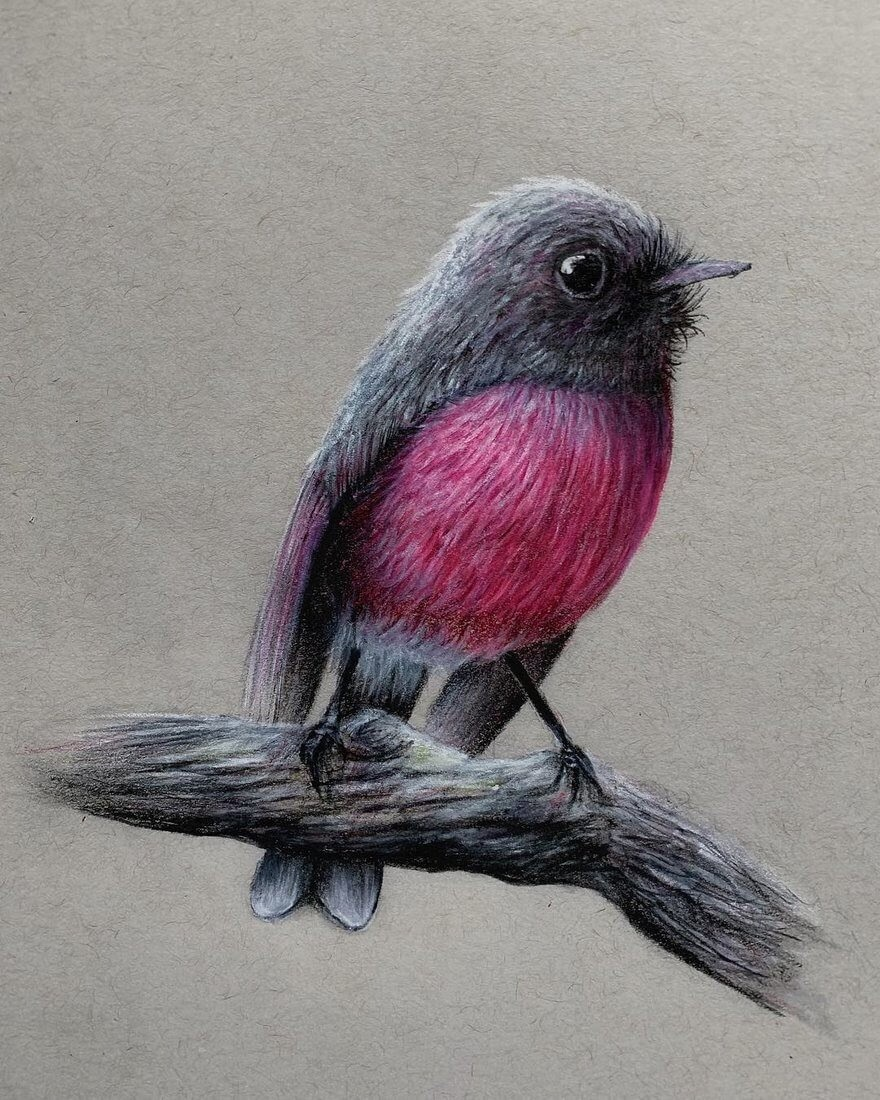 11-Pink-Robin-Jonathan-Martinez-Animal-Drawings-with-Colored-Pencils-www-designstack-co