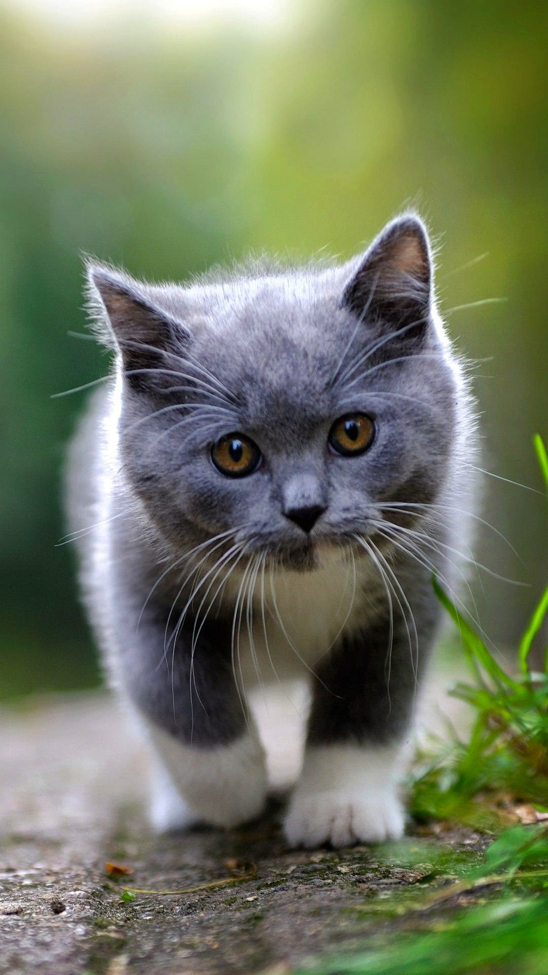 cute cat android wallpaper   (best andro wallpapers)