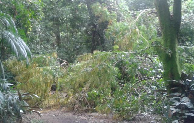 É possível o embargo de área desmatada sem licença ambiental, diz TRF1