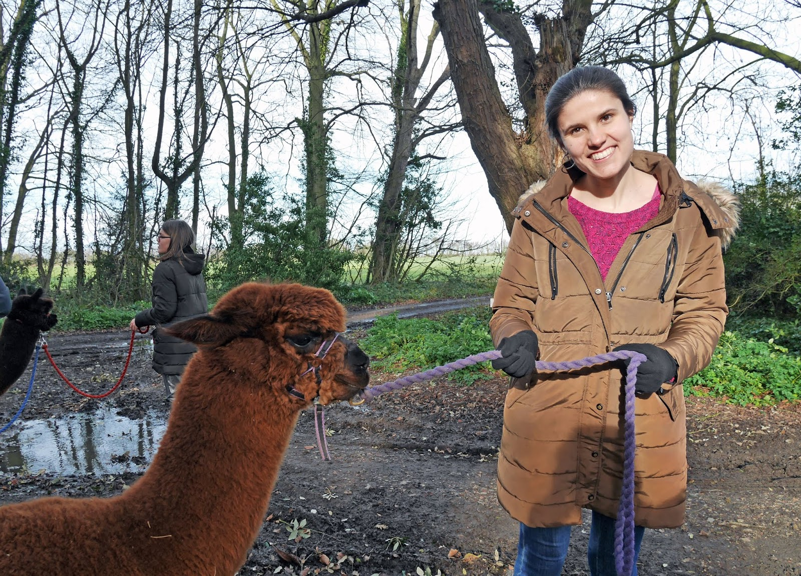 Kat Last with Alvin the alpaca on an alpaca trek with Woodland View Alpacas in Birchington, Kent