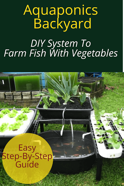 DIY System To Farm Fish With Vegetables
