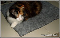 Calico cat loves the purr pad