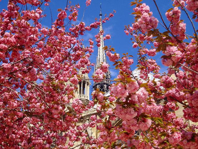 Flores em Paris em abril