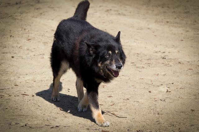 sekarotuinen koira