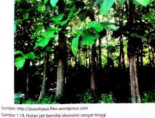Macam-Macam Potensi Sumber Daya Alam Indonesia