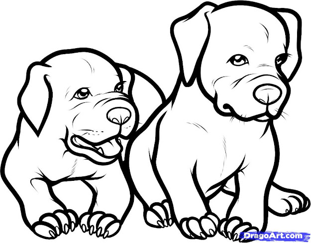 Pitbull Dog Coloring Pages   Animals Wallpaper Gallery   Versident