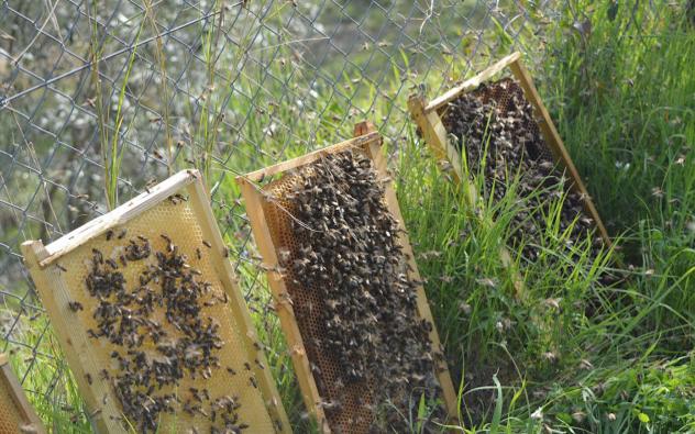 Επαναστατική μέθοδος τροφοδοσίας μελισσιών: Ταίζουμε ολόκληρο το μελισσοκομείο ταυτόχρονα μέσα σε λίγη ώρα