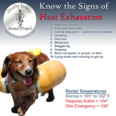Image result for heat stroke in dogs