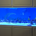 The choice of a Glass or an Acrylic Fish Tank
