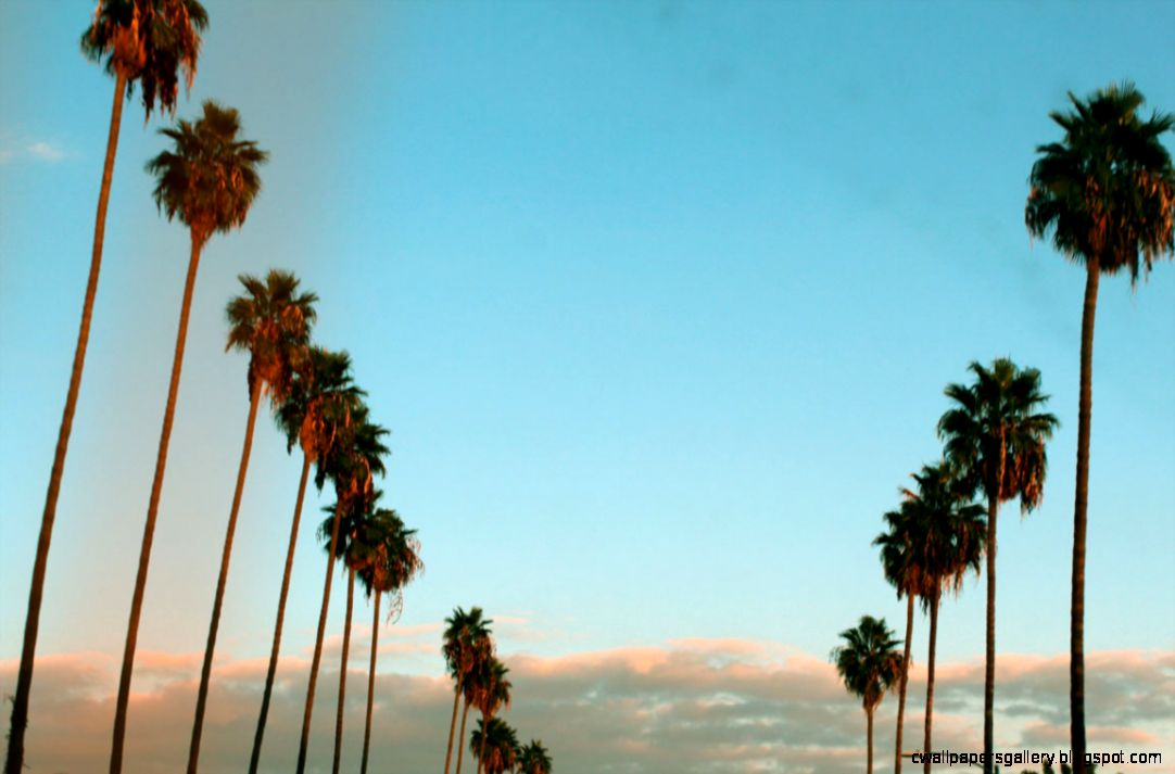 California Palm Trees Sunset Tumblr   wallpaper