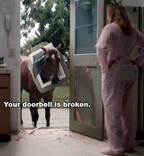 Donkey knocks on the door funny joke picture