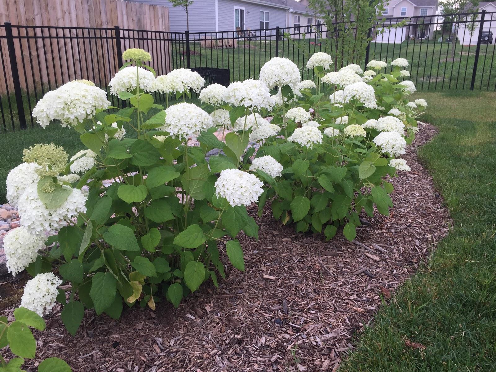 Backyard Neophyte Landscaping Blog July 2015