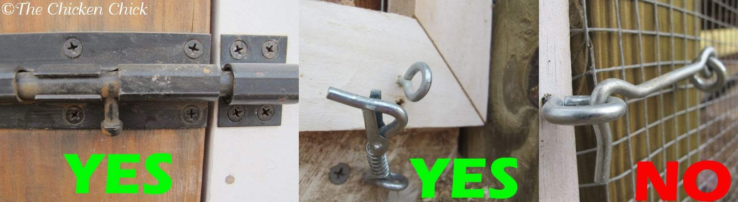 Opt for barrel locks, padlocks, or any other lock that requires multiple steps to unlatch. Raccoons can operate simple locks and turn basic chicken coop door handles.