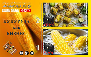 Кукуруза в початках Украина. Идеи бизнеса