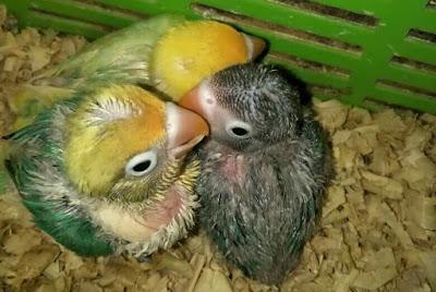 http://kicaumaster89.blogspot.com/