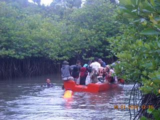 hutan mangrove1
