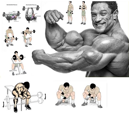 How to Get Big Arms in 2 Weeks ?