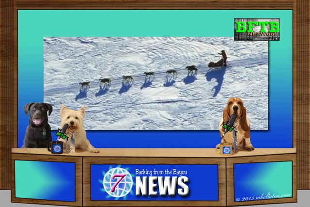 BFTB NETWoof dog news anchor desk with Iditarod on screen