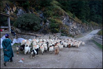 Jomsom to Muktinath Trekking Tale