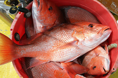 Where to Buy Red Snapper