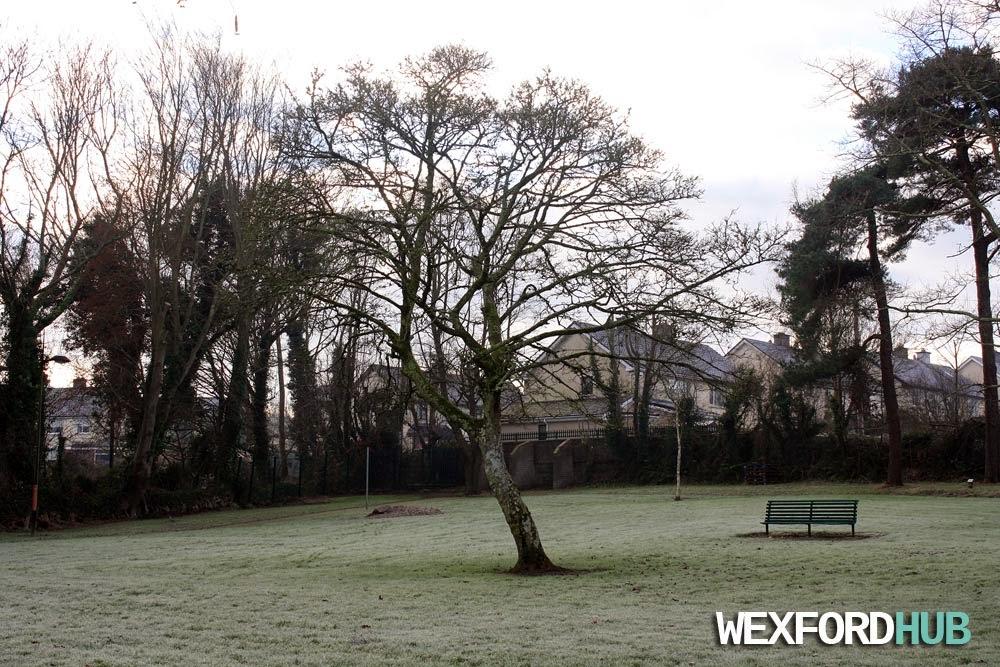Tree in Redmond Park