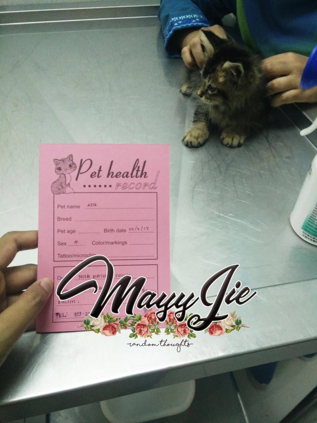 Dalam bilik rawatan Kucing