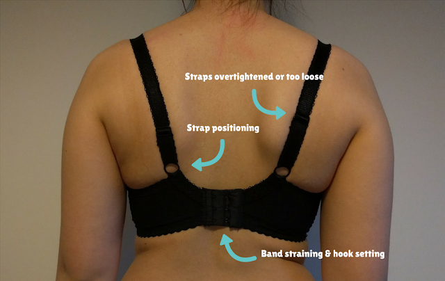 An image from the back of someone wearing a bra, labelled with the fit aspects visible at this angle.