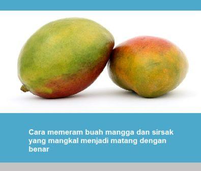 Cara memeram buah mangga dan sirsak yang mangkal menjadi matang dengan benar