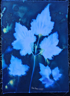 Wet cyanotype, Sue Reno, Image 6