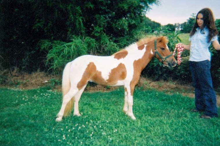 All About Owning Your Own Mini Horse