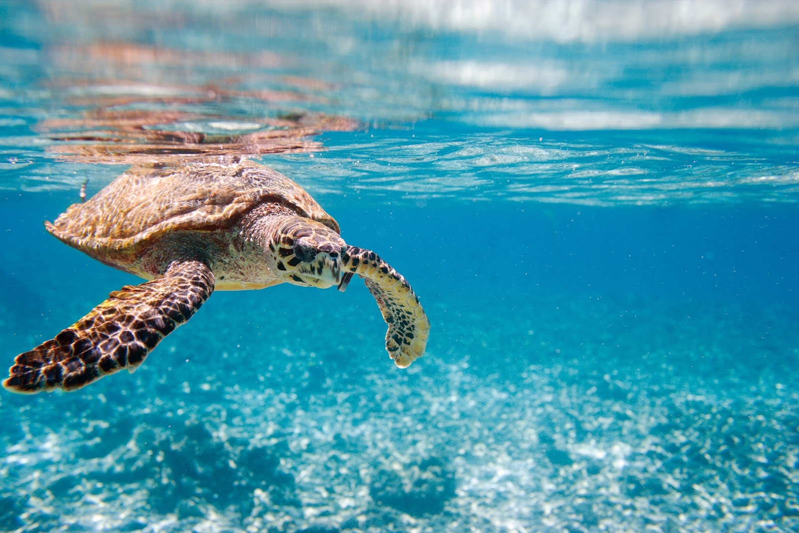 9 Best Resorts in Seychelles for a Honeymoon