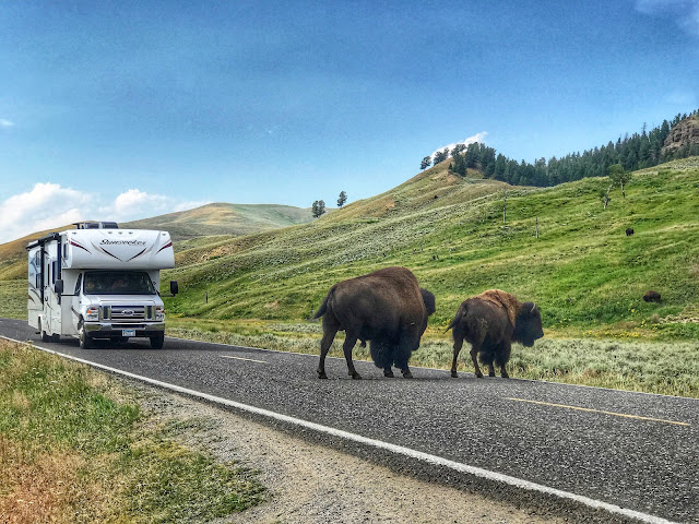 Bison Crossing at Yellowstone National Park