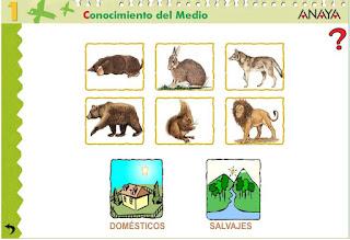 Animales mamíferos